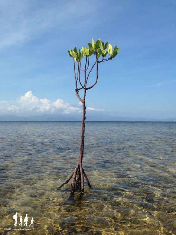 Bali-Lembongan (194)