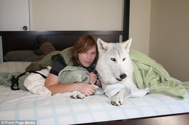 Executive Director of Project Wildsong Sharing Bed With Big Bad Wolf