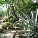 Palm_Springs_Moortens_Botanical_Gardens