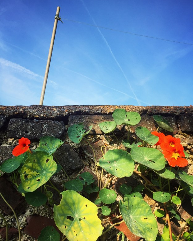 photo-04-10-2016-09-44-40
