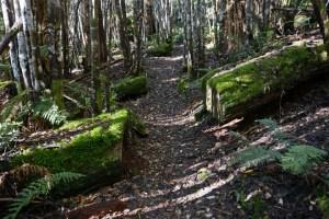 lemonthyme 5 forest