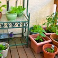 How to Grow Vegetables in Pots-No Yard Required!