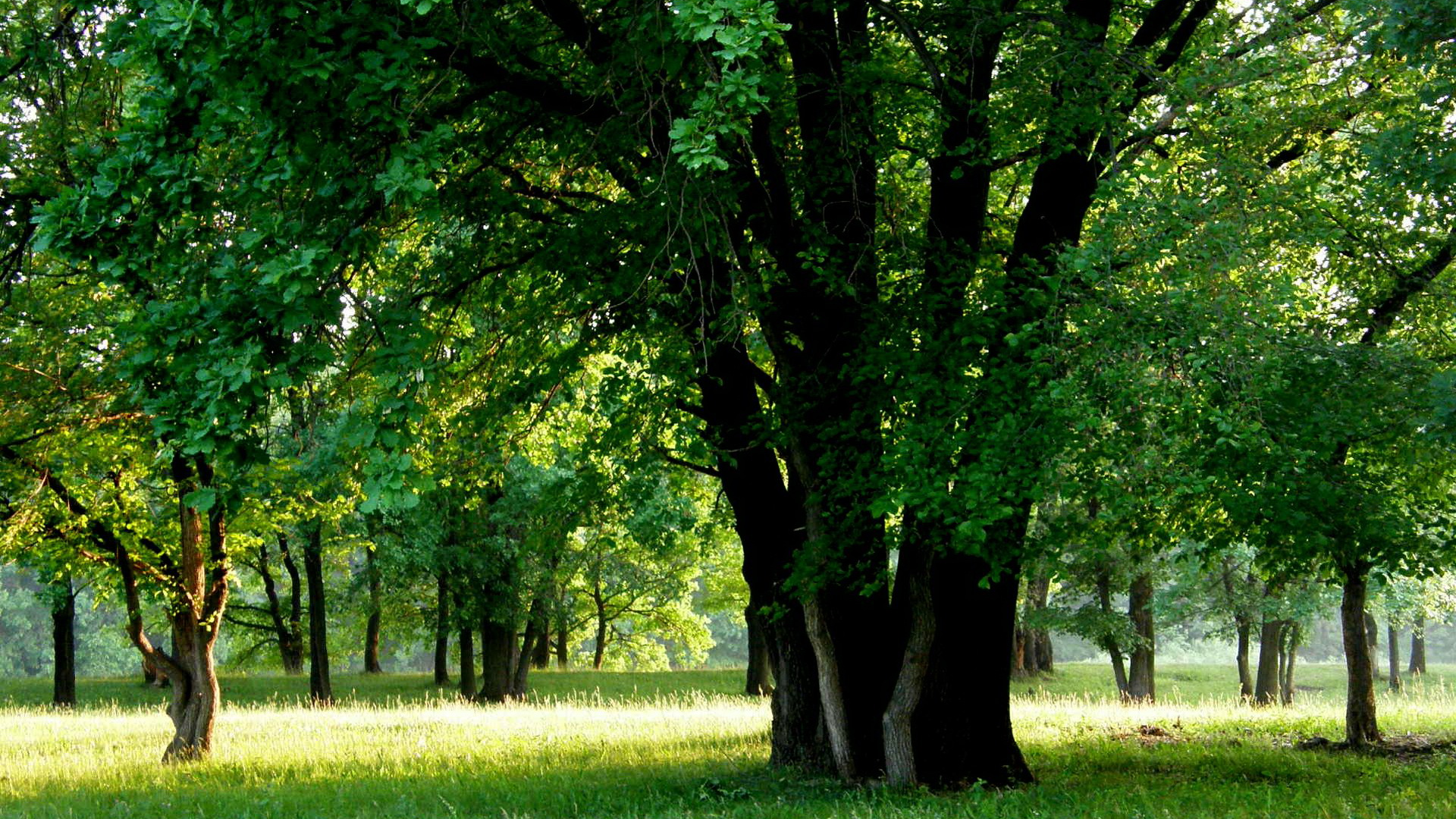 Wallpaper Dinding Pemandangan 3d Nature Images Tall And Green Trees In Prosperous Growth