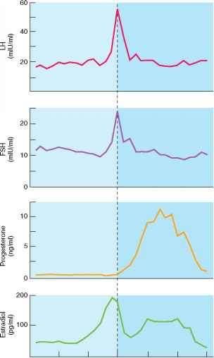 Phases of the Menstrual Cycle Cyclic Changes in the Ovaries - Human