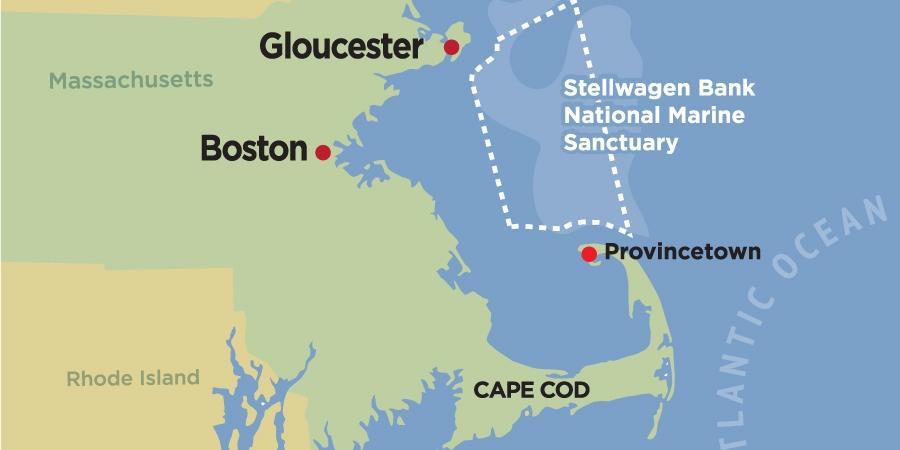 7 Seas Whale Watch Gloucester ~ Best Boston Whale Watching ~ Watch