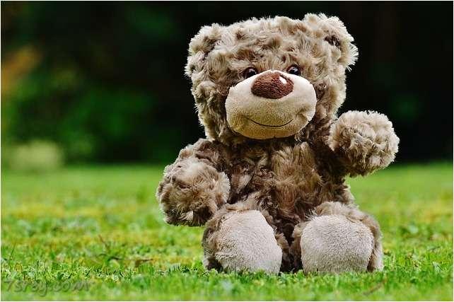 Cute Baby Bears Wallpaper صور الدب أجمل صور دببه متنوعة خلفيات دب للفيس بوك