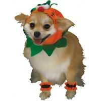 Pumpkin Dog pumpkin dog costume