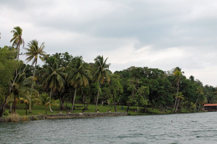 The shores of the Rio Dulce
