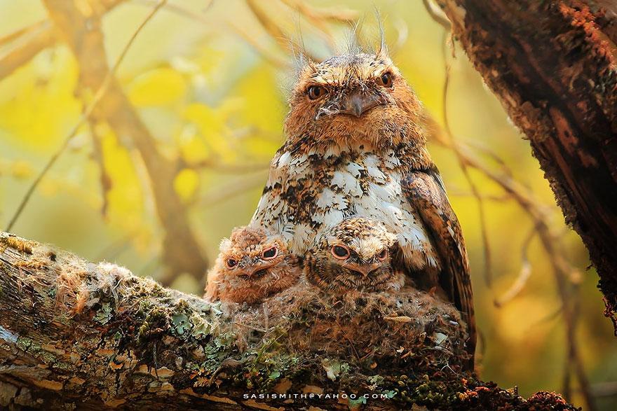Lifelike 3d Wallpaper Best Owl Photography Captures Ever 99inspiration