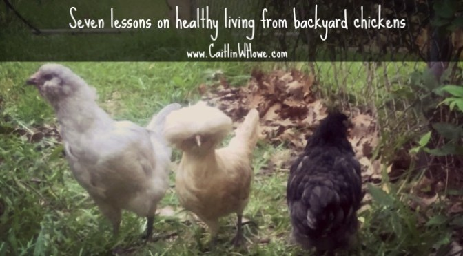 Seven lessons on healthy living from backyard chickens
