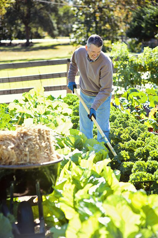 intensive planting rows_vert_low