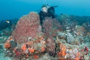 Best coral reefs in Florida