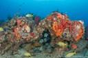 Palm Beach has tons of marine life