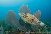 Photobombed by a scrawled filefish