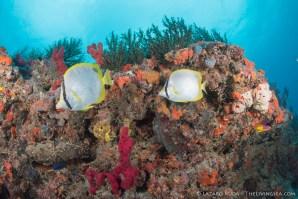 Palm Beach diving