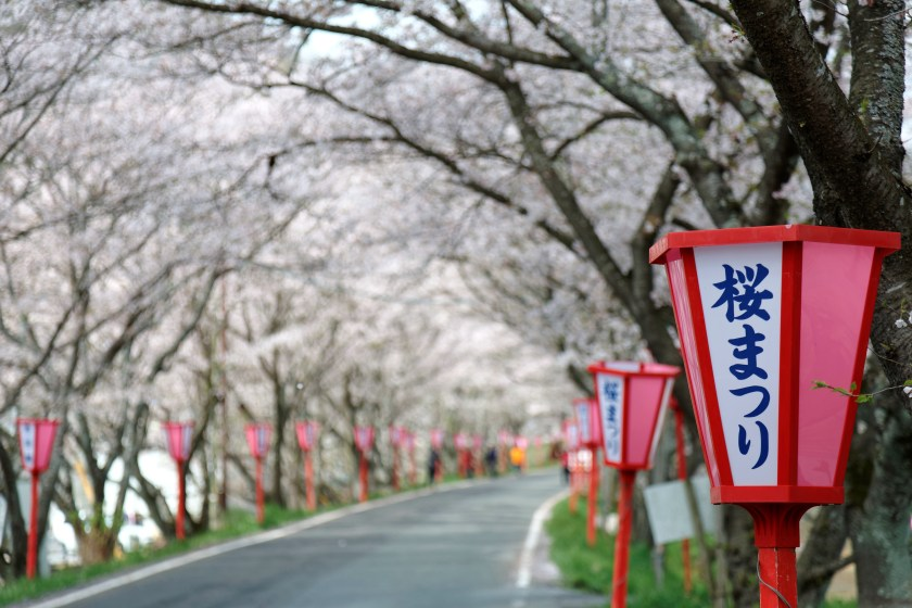 the Luxury Travel Company cherry tree blossom trip Japan