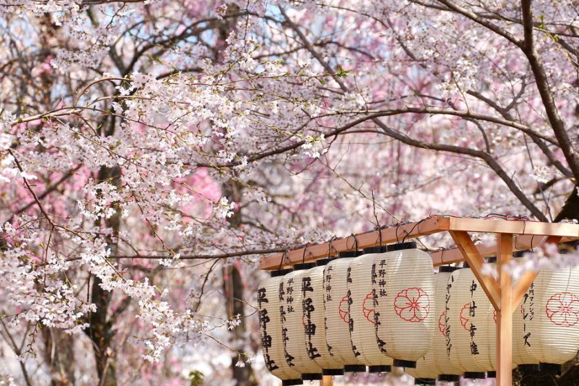 visit Japan cherry blossom season The Luxury Travel Company