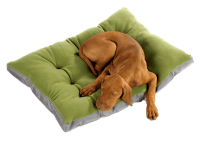 A1 Bed & Biscuit | Pet Boarding and Daycare | Pet Grooming