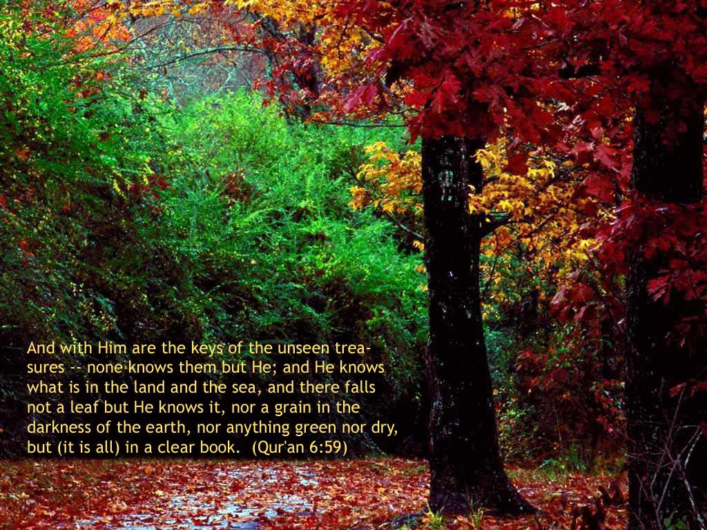 Fall Verse Wallpaper Not A Leaf But He Knows Nature Islamic Wallpapers