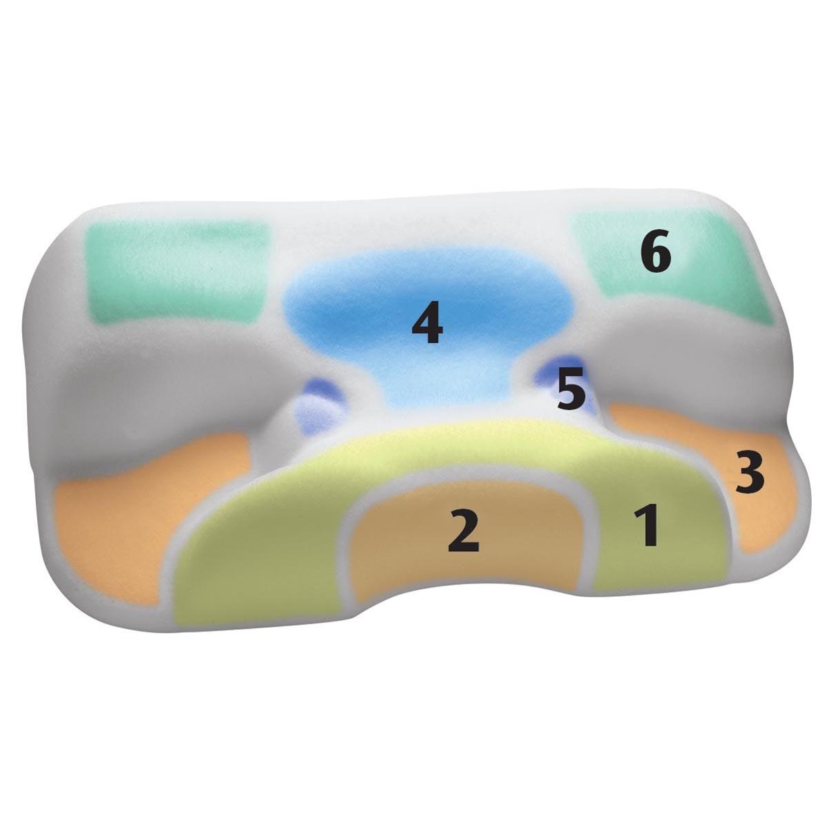 Cpap sleep apnea pillow, circadian clocks how rhythms