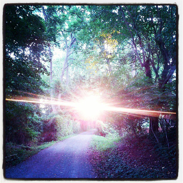 A picture of the morning sun, shining brilliantly through a canopy of leaves over a gravel path.