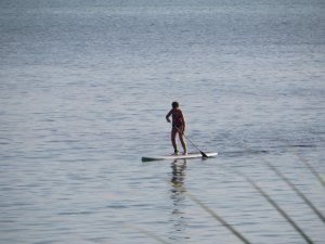 Paddle boarding is very popular!