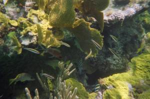 Reef at Casuarina Point (15)
