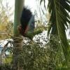 Parrot landing - wings up