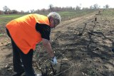 Bev Murphy bends over the barbed wire she is removing from the burnt fence line.