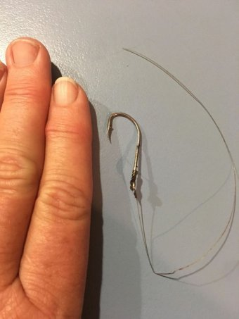 Fishing hook next to a person's hand