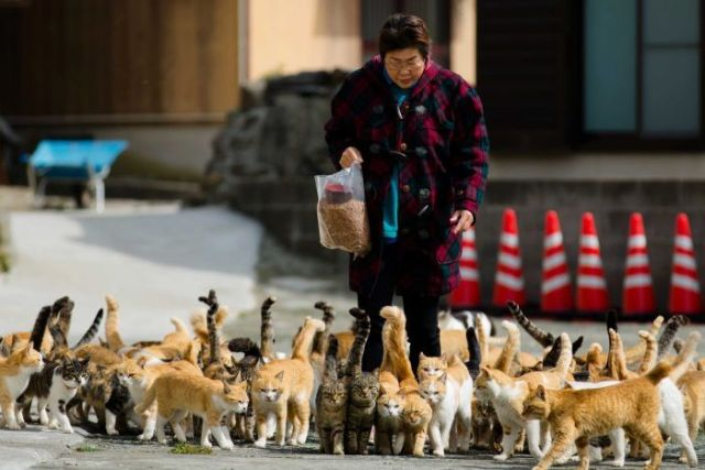 Cat tourism: Japan island swarm
