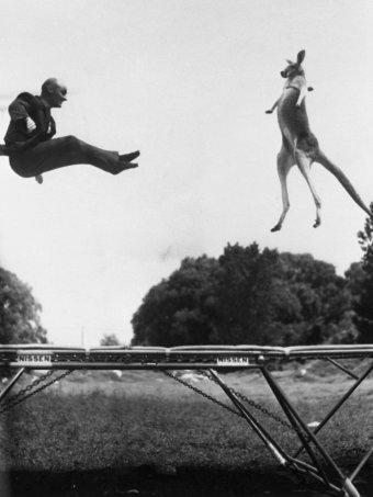 A man and a kangaroo jump on a trampoline.