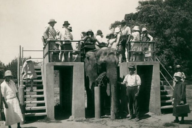 People mounting Lillian the elephant for a ride at the Adelaide Zoo