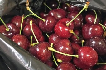 Premium cherries in a box