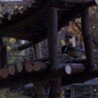 Vogelhaus selber bauen?