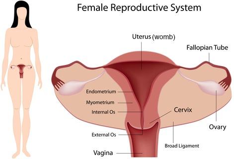 Causes of Female Abdominal Pain, Diagnosis  Treatment ABDOPAIN