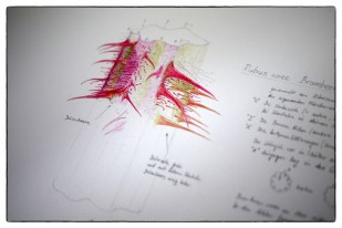 botanische-illustrationen-1024x684
