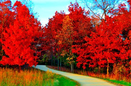 Late Fall Wallpaper Nature Intense Color Bike Trail And Nature Photos Page 1