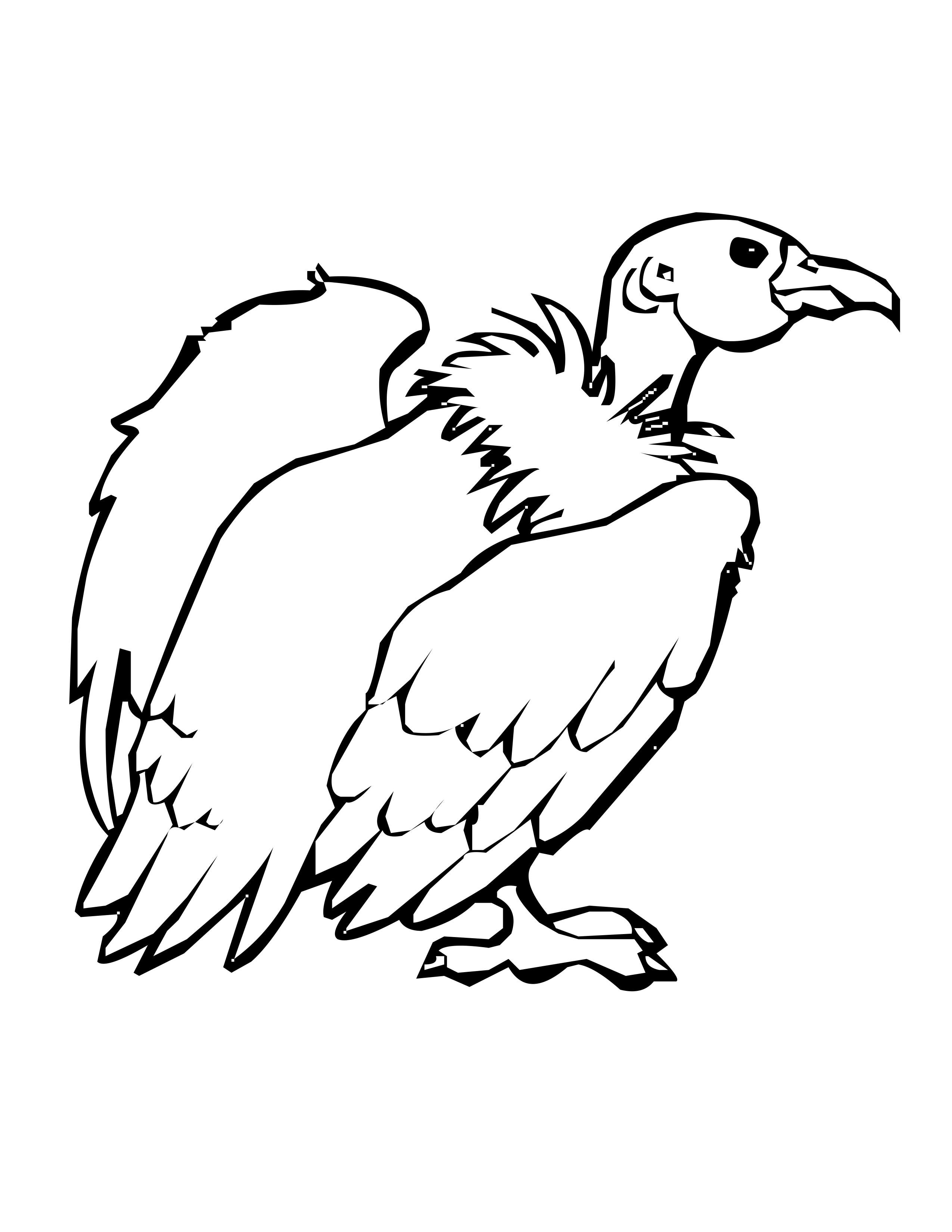 Vulture Coloring Pages - Democraciaejustica