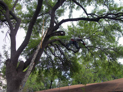 Best Time To Trim Trees - Above All Tree Service
