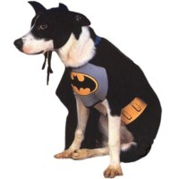 Top Selling Halloween Costumes for Dogs 2016