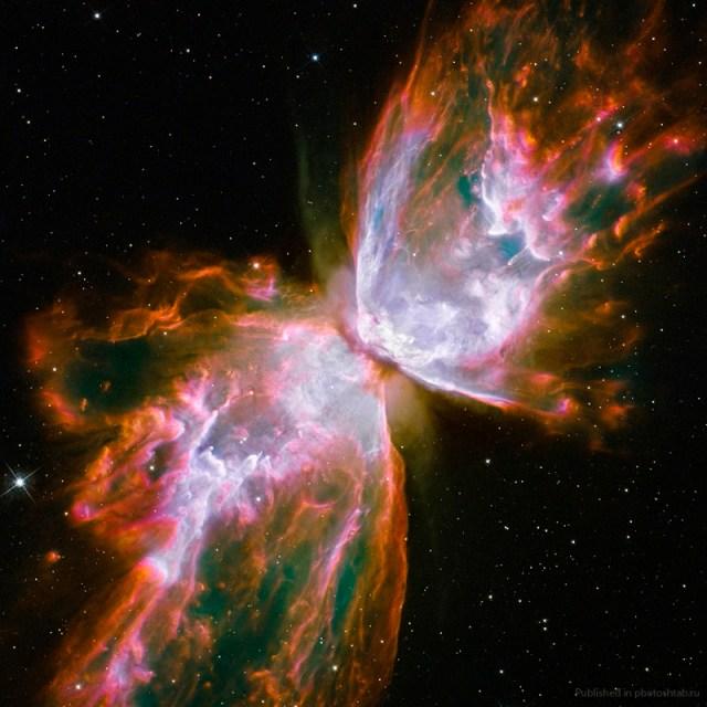 The Primer Fields Bug-nebula