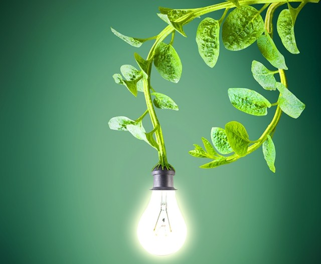 DUTCH HARVEST ELECTRICITY FROM LIVING PLANTS TO POWER STREETLIGHTS, WI-FI & CELL PHONES Power-from-plants