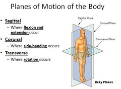 planes of motion of body