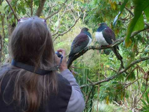 Kerikeri Accommodation Kereru at Wharepuke