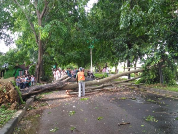 Aceh Dilanda Angin Kencang