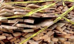 kayu-ilegal-1024x606-1.jpg.jpeg