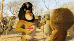 scene from DreamWorks Pictures' Madagascar: Escape 2 Africa (2008)