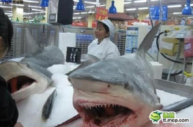 cabeça de tubarão