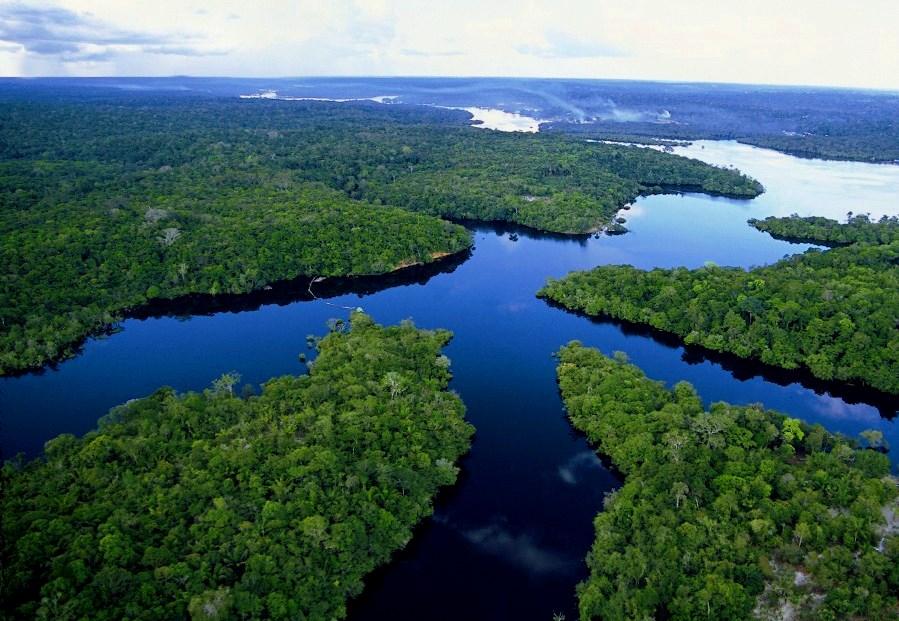 floresta amazônica 1